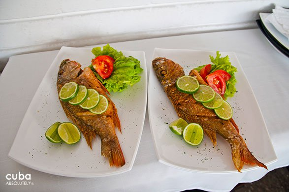 2 dishes with fish at Vistamar restaurant in Miramar© Cuba Absolutely, 2014