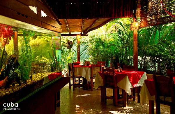 restaurant on a rustic ranch with plants © Cuba Absolutely, 2014