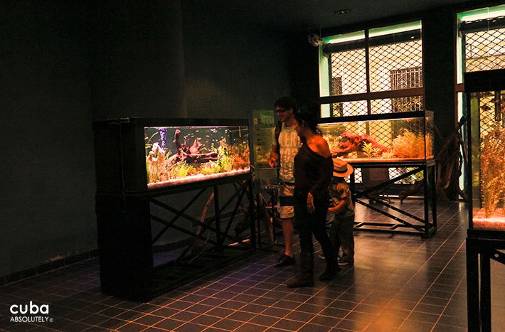 Tropical fish acuarium in Old Havana © Cuba Absolutely, 2014