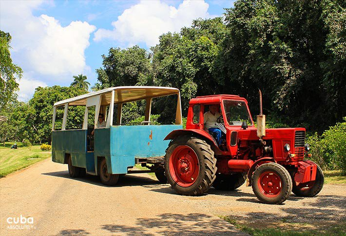 Red truck in National Botanic garden, plants and water, all nature © Cuba Absolutely, 2014