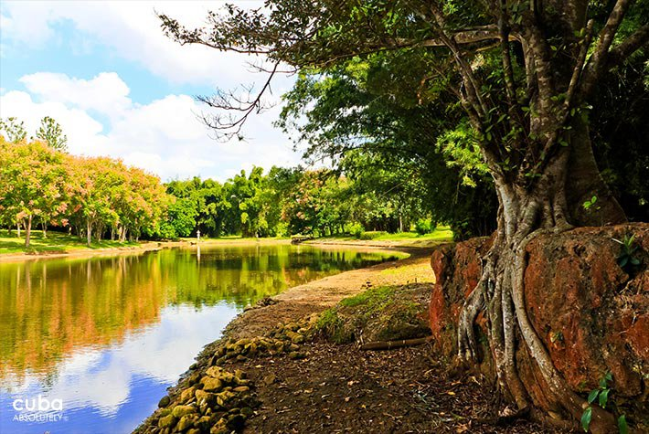 National Botanic garden, tree next to a river  © Cuba Absolutely, 2014