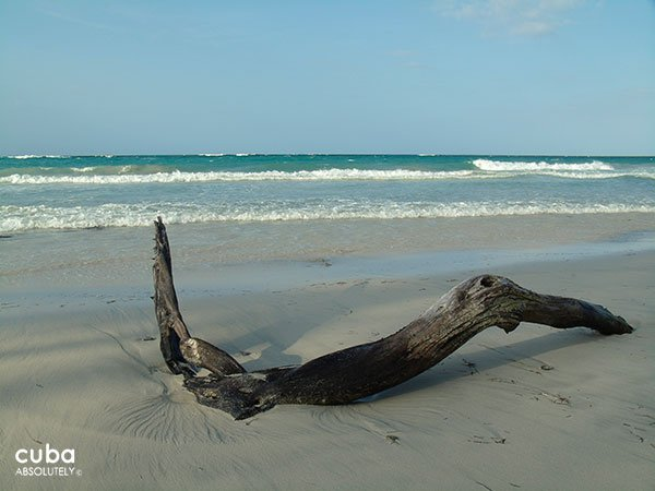 Dead palm at the beach © Cuba Absolutely, 2014