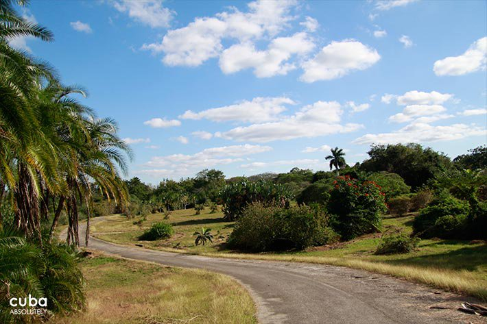 Road with plants on the sides © Cuba Absolutely, 2014
