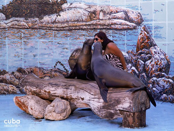 Seals at Acuarium in Miramar © Cuba Absolutely, 2014