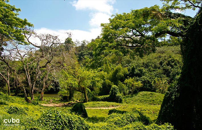 forest at Metropolitan park © Cuba Absolutely, 2014