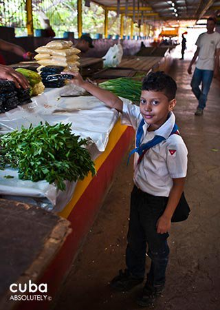 Market on 19 y B in Vedado, kid in front some vegetables © Cuba Absolutely, 2014 - 2020
