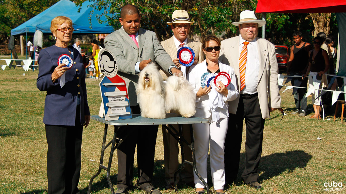 2012 Havana Dog Show: Mad dogs & Englishmen