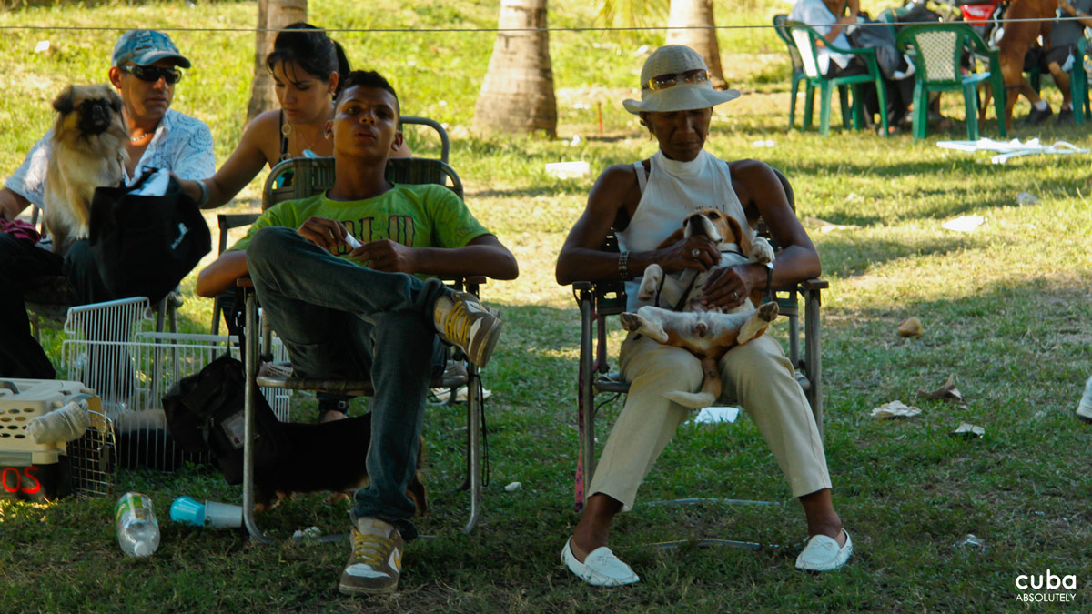The relatively low numbers of dogs competing in Havana's dog shows, however, doesn't mean that breed standards are relaxed. Havana, Cuba