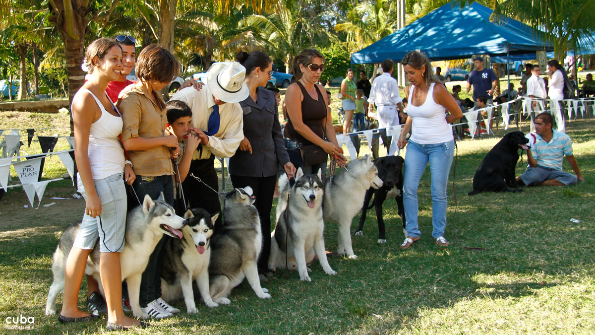 The International Spring Dog Show brings together dog owners, breeders, handlers and dog lovers every single year. Havana, Cuba