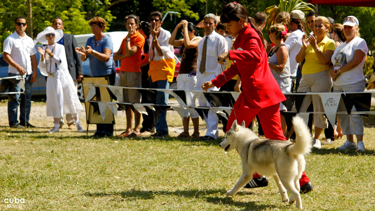 The International Spring Dog Show gathers dog owners, breeders, handlers and dog lovers every year. Havana, Cuba