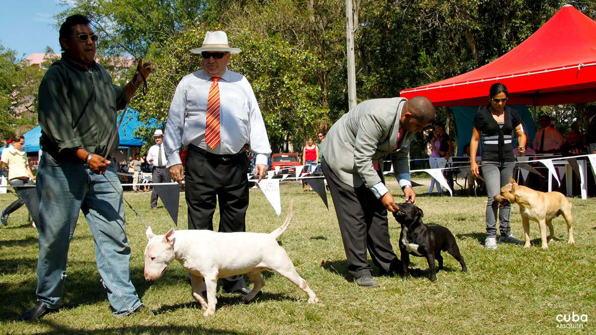 I, in particular, am new to dog shows and was pretty much impressed at the variety of specimens that were competing. Havana, Cuba
