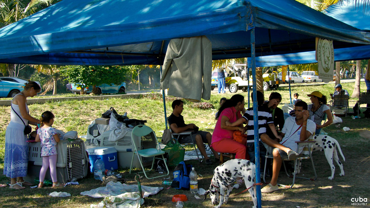 A great deal of activity took hold of the usually peaceful ecological areas of the Parque Metropolitano de La Habana during April 26-29, 2012. Tents, awnings, boxes, crates, street vendors, photographers...and dogs, all filled the natural environment that is part of the city's green belt. It was the International Spring Dog Show. Havana, Cuba