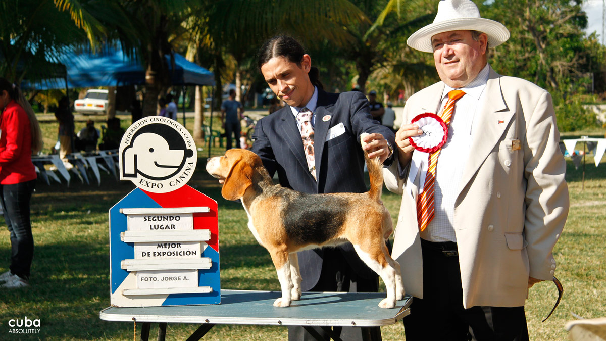 Every day, there is a selection of Best in Show, which become the contenders for Best of the Best in the categories of Baby, Puppy, Junior and Adult. Havana, Cuba